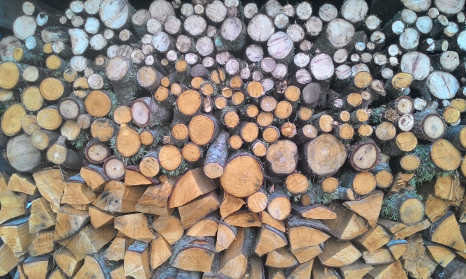 ファームステイ中に山では木の伐採や薪割りも体験