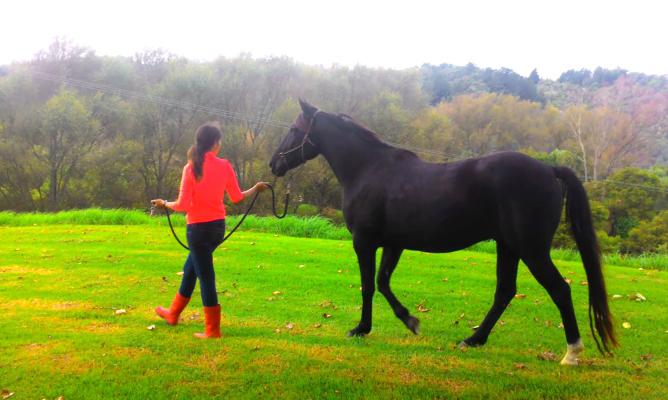 ニュージランドのファームステイで馬の世話をする妻