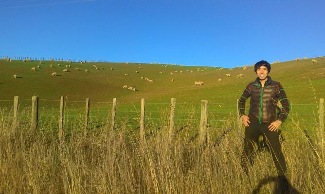 ニュージーランドでは羊の数が人の数を上回る