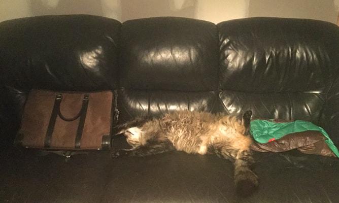ソファーの上で仰向けに寝転がって完全リラックスの猫
