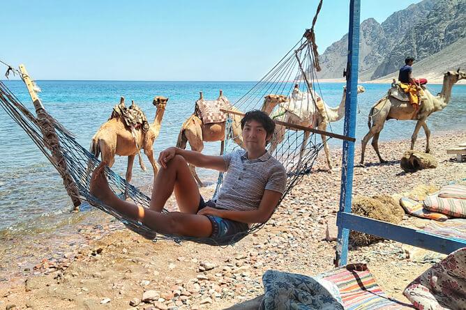 ラクダとビーチを背景にハンモックで寛ぐ