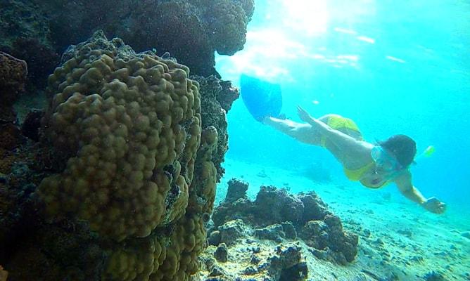 クック諸島ラロトンガ島でのフリーダイビング