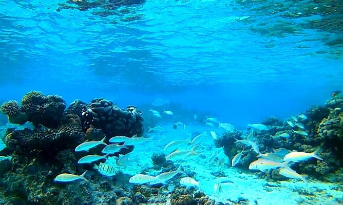 ラロトンガ島の珊瑚礁と美しい魚の群れ