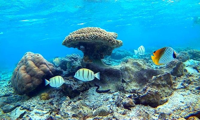 クック諸島ラロトンガ島でのシュノーケリング