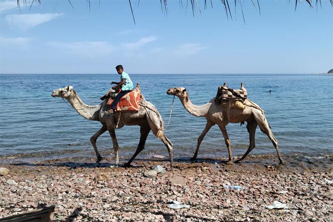 Three Pools のビーチでラクダに乗る少年