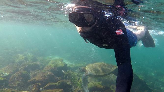 ガラパゴスアオウミガメはスノーケリング初心者でも見られる
