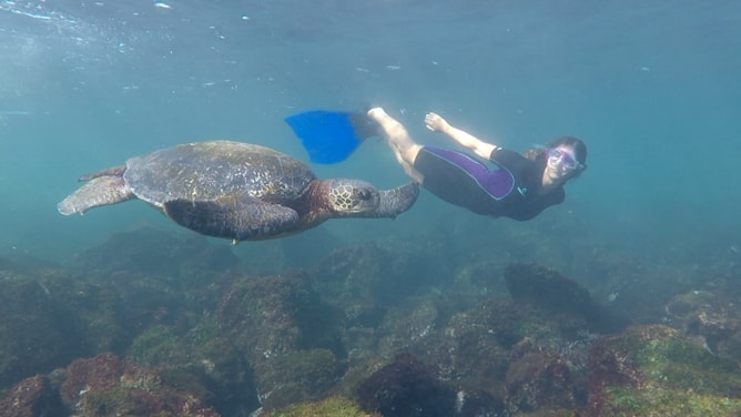 ガラパゴスアオウミガメと一緒に泳いでいる妻のオリアン