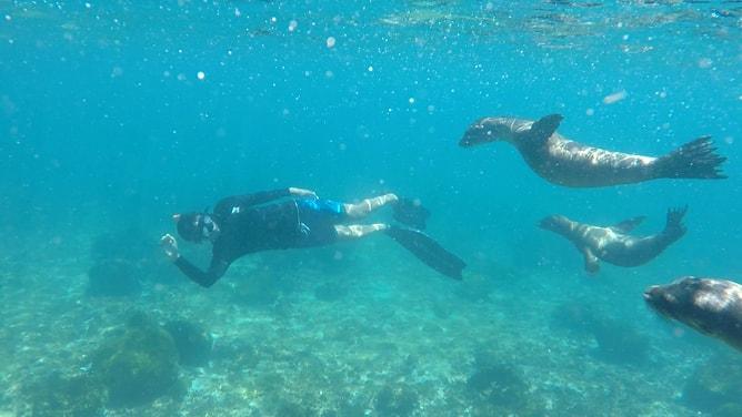 水中でガラパゴスアシカと一緒に泳ぐ