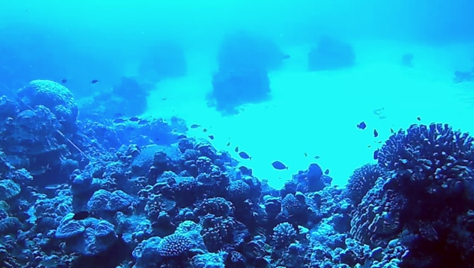 ゴープロ(GoPro)カメラで撮影したスクーバダイビングの水中写真。その1