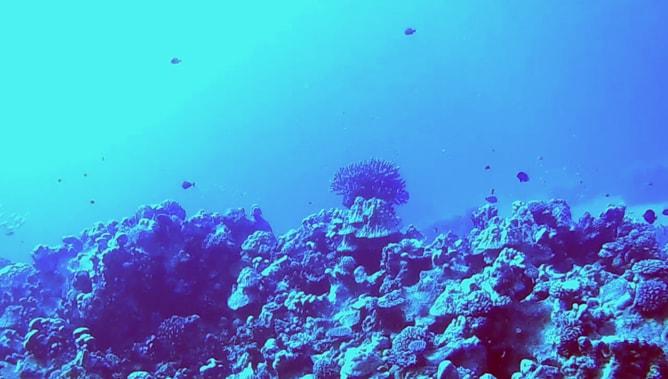 ゴープロ(GoPro)カメラで撮影したスクーバダイビングの水中写真。その2