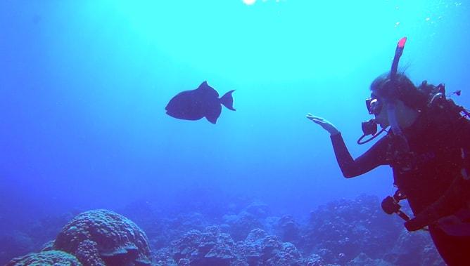 ゴープロ(GoPro)カメラで撮影したスクーバダイビングの水中写真。その4