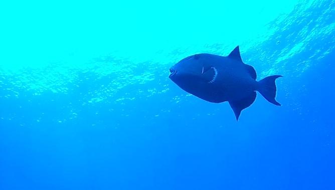 ゴープロ(GoPro)カメラで撮影したスクーバダイビングの水中写真。その5
