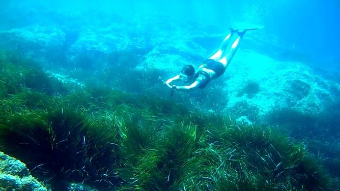 ゴープロ(GoPro)カメラで撮影したコート・ダジュールの水中写真。その4