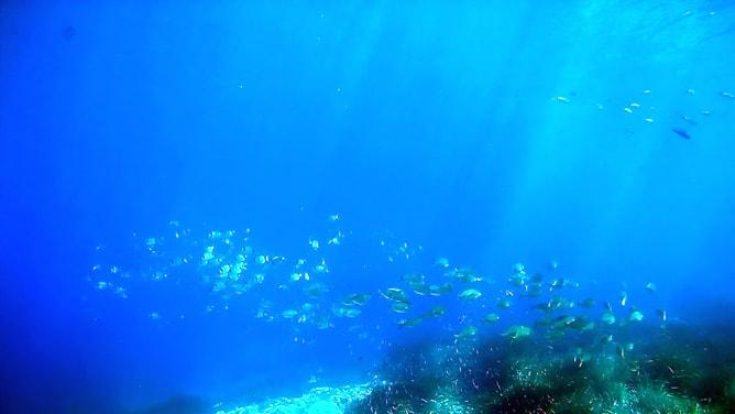 ゴープロ(GoPro)カメラで撮影したコート・ダジュールの水中写真。その5