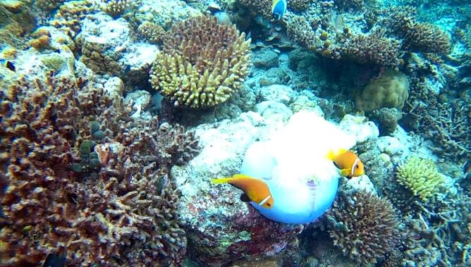 ゴープロ(GoPro)カメラで撮影したモルディブの水中写真。その1
