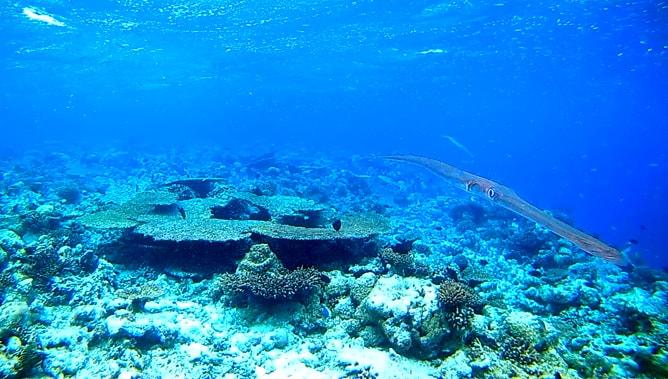 ゴープロ(GoPro)カメラで撮影したモルディブの水中写真。その2