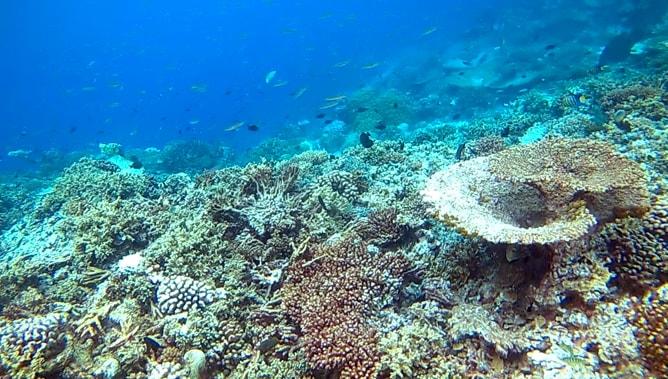 ゴープロ(GoPro)カメラで撮影したモルディブの水中写真。その3