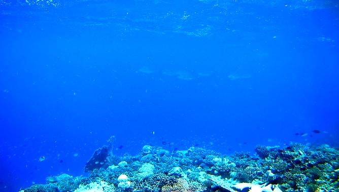 ゴープロ(GoPro)カメラで撮影したモルディブの水中写真。その4