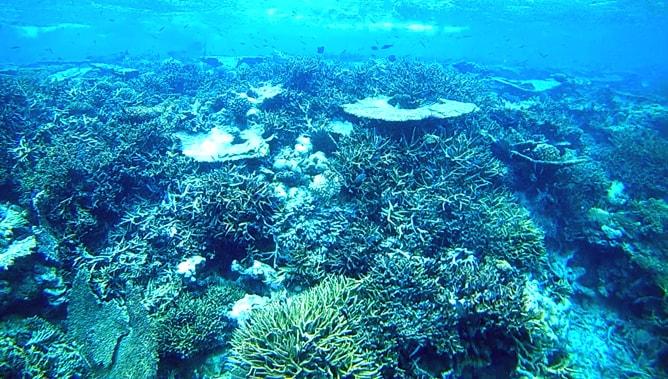 ゴープロ(GoPro)カメラで撮影したモルディブの水中写真。その5