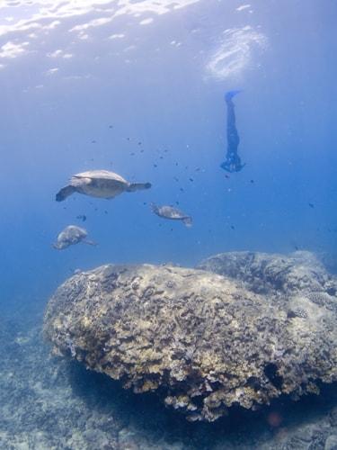 ウミガメと泳ぐために、いざ海の中へ!