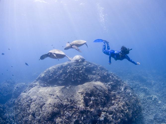 ウミガメと泳ぐマーメイド?