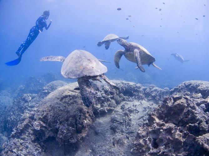ハワイ・オアフ島で奇跡のシュノーケリング!ウミガメ5匹と泳ぐまで