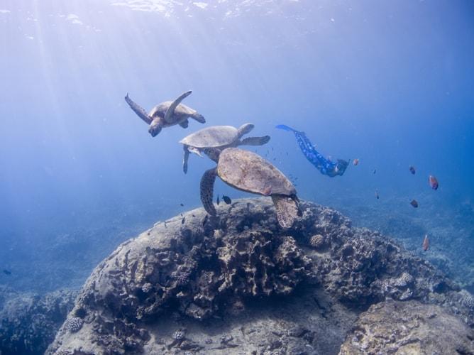 ハワイでウミガメとのシュノーケリング楽しすぎ!