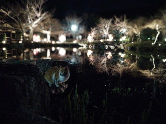 東山花灯路 円山公園の猫 2019年3月8日撮影