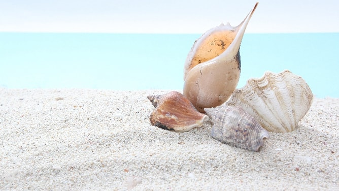 白い砂浜の上に重ねられた貝殻