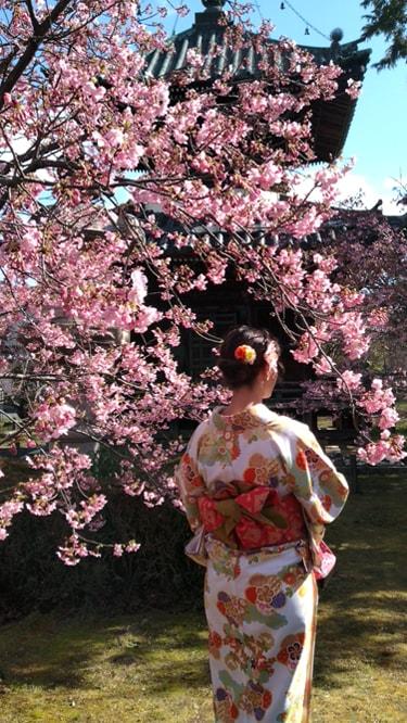 清凉寺(嵯峨釈迦堂)の桜と多宝塔 2019年3月8日撮影