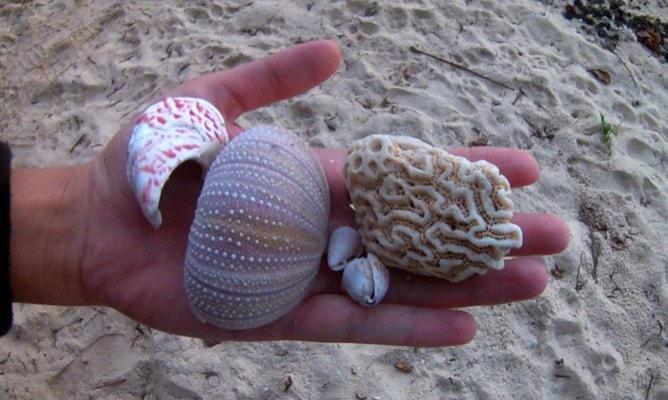 ラロトンガ島のビーチで見つけられる貝殻と珊瑚はお土産にもピッタリ